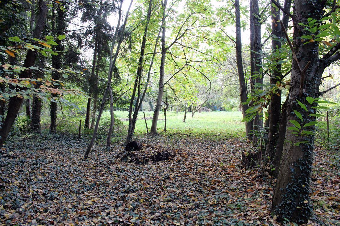 Garten_Wald